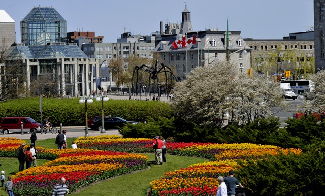 Byward-Market-majors-hill-park-flowers